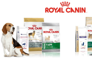 Preview 2 of the Royal Canin website
